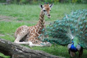 Zoo Bronx - Nueva York